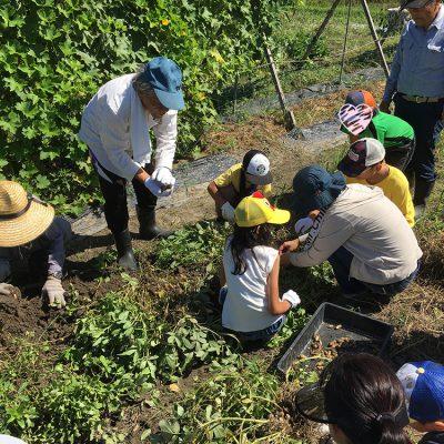 9月8日農業クラブ-落花生の収穫