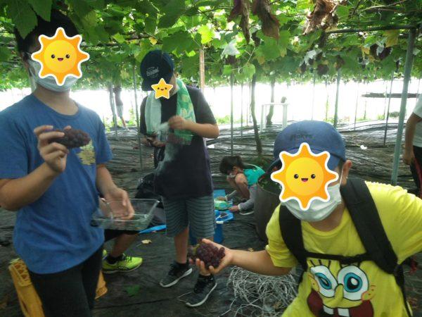 ブドウ狩り3