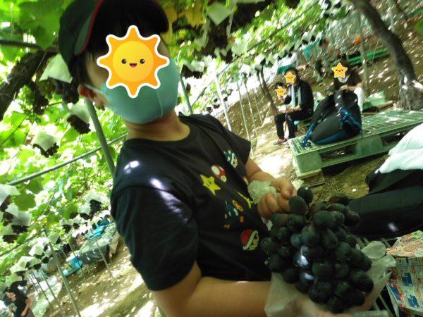 ブドウ狩り6